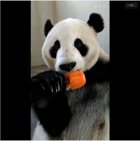 【ペロペロ動画】可愛いあの子がキンキンのアイスをペロペロちゅぱちゅぱしちゃう動画 / 視聴者の声「これはけしからん」「萌え~」