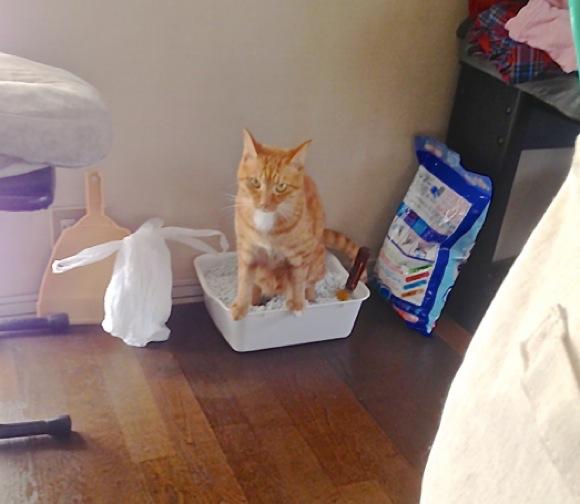 知ってた? 水没したスマホは「猫のトイレの砂」に入れると復活するらしい