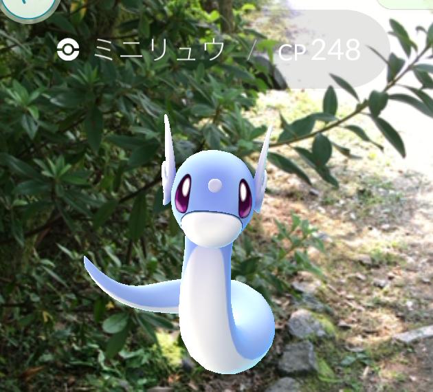 【ポケモンGO】レア度高めな『ミニリュウ』をゲットしたくば京都に行け! 「円山公園」で取れまくりだぜ!!