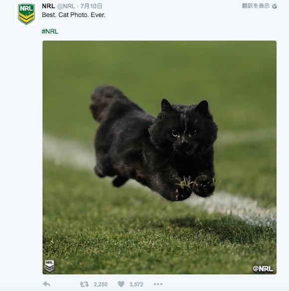 【動画あり】ラグビーの試合に「ネコ」が乱入 → 鋭いステップを踏んで大爆走!