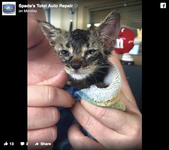 子ネコを救出するために愛車を破壊した夫婦に拍手喝采