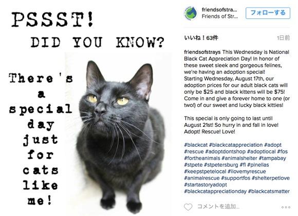 """8月17日は「黒ネコ感謝の日」! """"貰われにくい"""" 黒ネコたちに新しい家族を作るための日なんだゾーーーーー!!"""