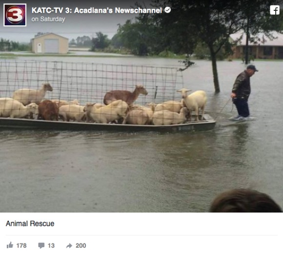 米ルイジアナ州の大洪水から動物たちを懸命に助ける人々が話題に
