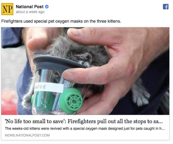 子ネコを救った消防士のセクシーさにネット民昇天「こんなんアリ?」「ただワオ!」