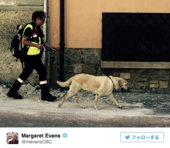 イタリア地震で活躍する災害救助犬たち / がれきの中から子供や動物を救出