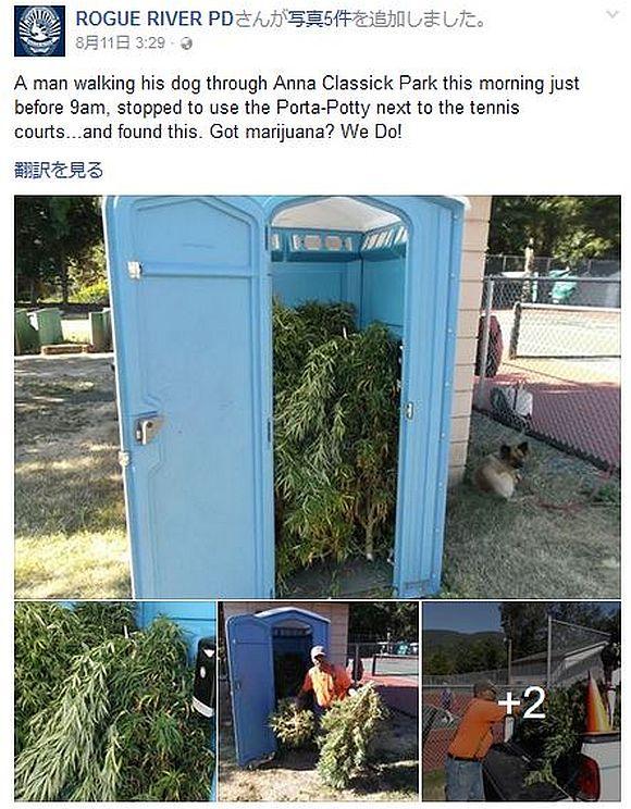 【目を疑う光景 】仮設トイレを開けたら大麻がワッサワサと出て来たでござる! 受け渡し場所がトイレだった模様
