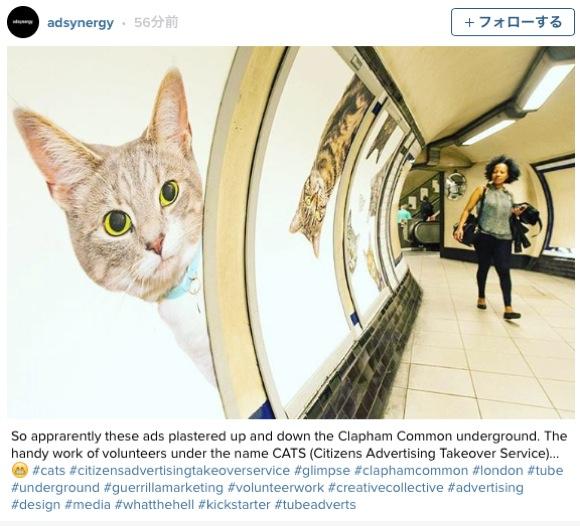 """地下鉄の駅をネコが """"乗っ取り"""" 話題に / 広告を一掃し「家族を募集するニャンコ」の写真が大集合!"""