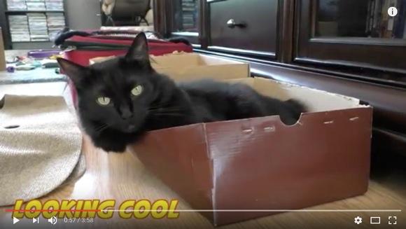 ニャンコが教えてくれる「飼いネコを幸せにする5つのアイディア」がこれだ!
