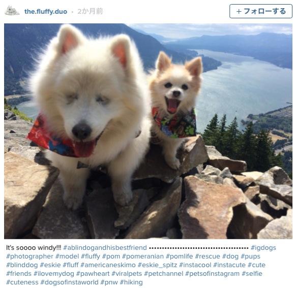 【最強の2匹】盲目のワンコ&お助けワンコの美しき友情に思わず笑顔! 2匹で色々な場所を旅しているんだぞー!!