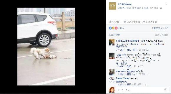 【目がウルウル】車にひかれた犬に寄り添うワンコの写真に涙!! ネットの声「だから人間よりも犬が好き」