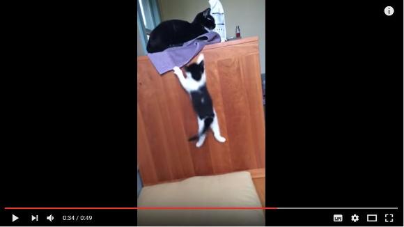 【感動画】絶対あきらめにゃい! テーブルに登ろうと何度もジャンプする子猫がカッコいい!!