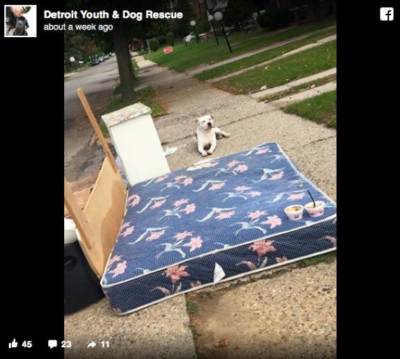 """""""ゴミ"""" として捨てられたワンコをネットで知った男性 / 現場に向かいイヌを救出保護"""
