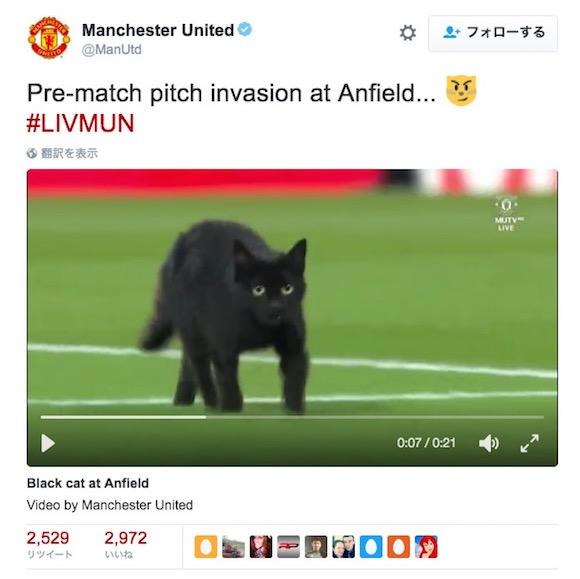 サッカーの試合に黒猫が乱入! 忍者顔負けの忍び込みでピッチに舞い降りる