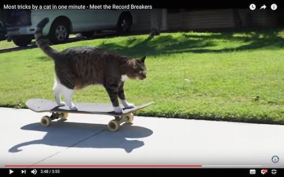 スケボー乗りもお手の物! 1分間で「20個も芸ができる猫」がギネス記録に認定される