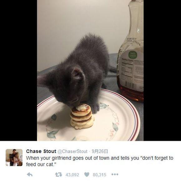恋人の留守中に彼女が飼っている子猫のために極小パンケーキを作ってあげた彼氏がステキだと話題 / ネットで「超羨ましい~!」と黄色い声が上がりまくる