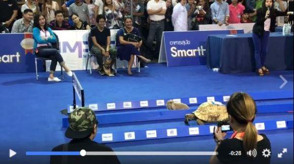 現実世界で「ウサギとカメのレース」が開催される → まさかの展開でカメ勝利!