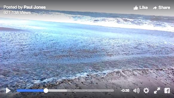【閲覧注意】もしかして人魚!? マーメイドのように見える腐乱死体が海岸に打ち上げられてネットが騒然!!