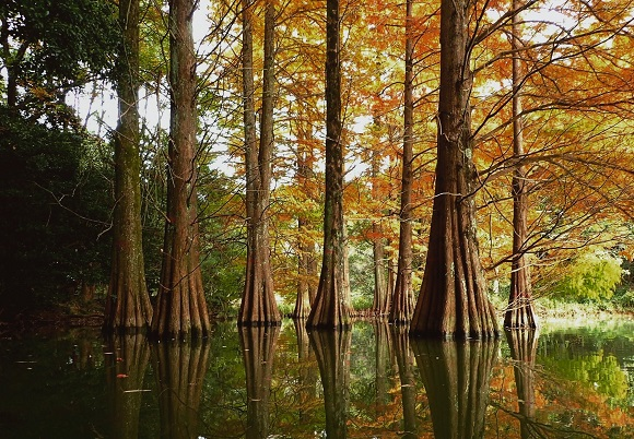 【絶景】福岡県篠栗町「篠栗九大の森」の幻想的な光景があまりにも美しい