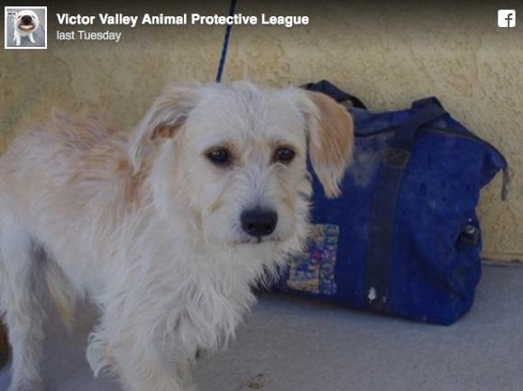 【九死に一生】砂漠に放置されたバッグにワンコが閉じ込められていた! 今では保護され幸せに