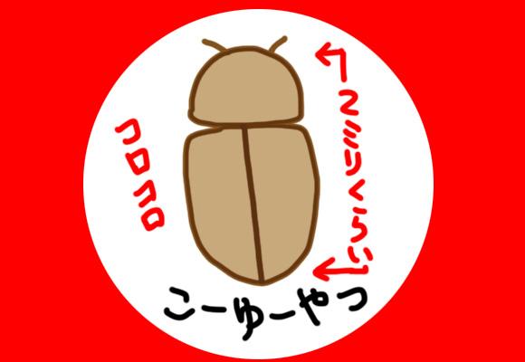 よく家で見かける小さくて茶色いコロコロした害虫「タバコシバンムシ」が大量発生! 最強家グモ「アダンソンハエトリ」と共闘し撲滅作戦に乗り出した