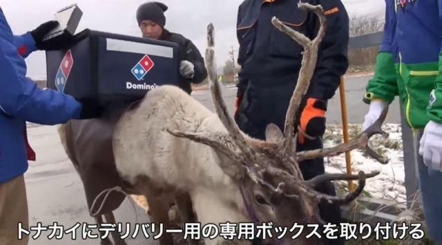 【マジかよ続報】ドミノ・ピザの『トナカイのデリバリー』は実現するのか!?  北海道でトレーニングした結果……!