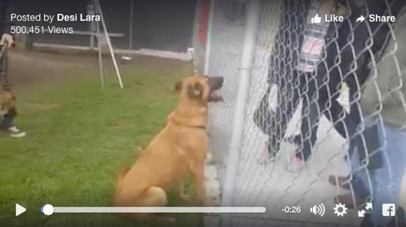 """【ヒドい】迷子で保健所に収容されたワンコを """"迎えに来たはずの家族"""" が別の犬を希望 → ネット民激怒"""