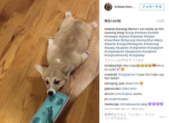 これぞ「世界一カワイイモップ」や! 自分の体で床の掃除をする子犬がキャワワすぎ