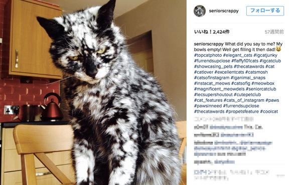 """ある黒猫が珍しい """"黒&白の霜降り柄"""" に変化!? 超かっけえ柄だとネットで人気者に"""