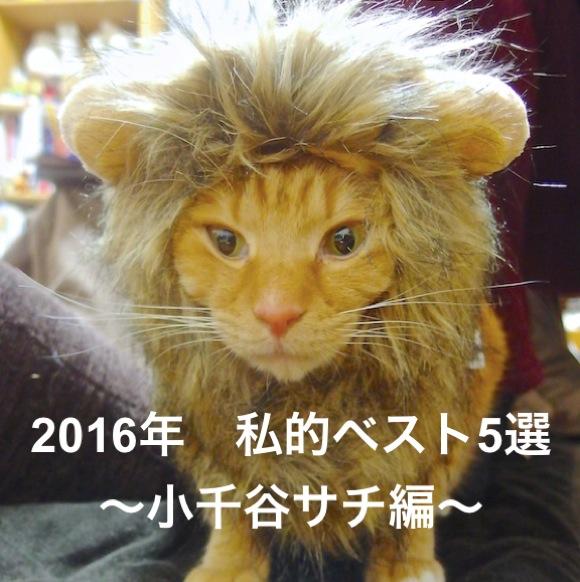 【私的ベスト】記者が厳選する2016年のお気に入り記事5選 〜小千谷サチ編〜