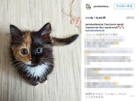 「奇跡の猫」再び! 顔の色がキッチリ2色に分かれている三毛猫がネット上で大・人・気!!