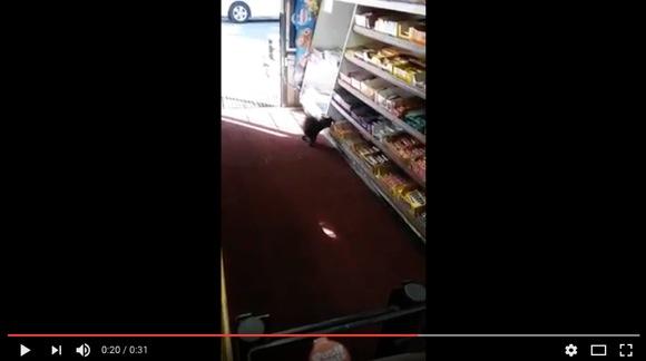 """""""コンビニからお菓子を盗むリス"""" が激撮される! 「カワイイ泥棒」と話題になるも頭を抱える店側"""