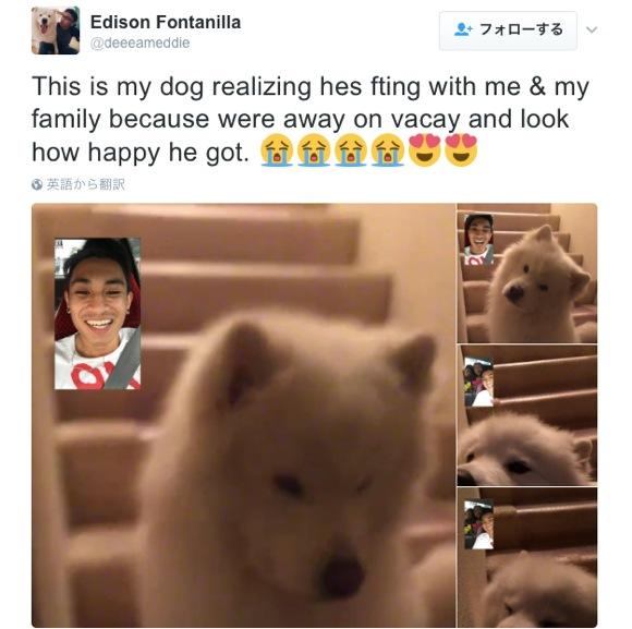 """""""旅先から FaceTime で飼い犬に話しかけたら激カワ反応が返ってきた"""" ってツイートにキュン死者続出!「泣いた」「神よ、犬をありがとう」など"""