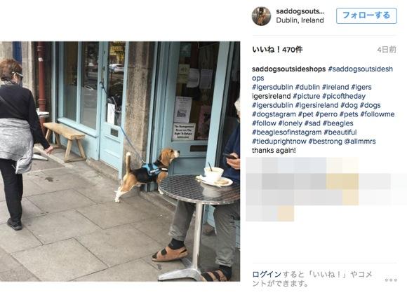 「店の前で飼い主を待つ寂しげな犬の画像」だけを集めまくったSNSページが人類の涙を誘いまくり!