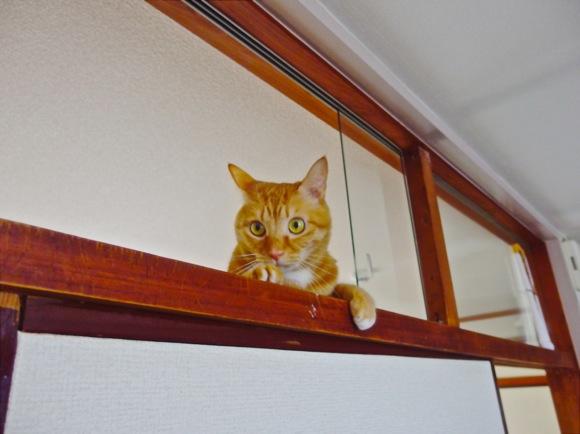 やっぱり猫には「お化け」が見えているの?