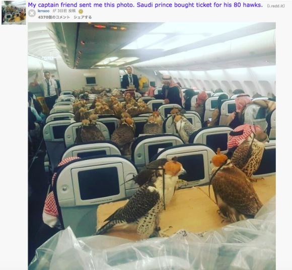 【ケタ外れの金持ち】サウジの王子がハヤブサ80羽のために飛行機の座席を大量確保! その画像が壮観すぎる!!