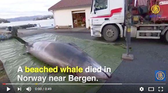 死んだクジラの胃袋から30枚ものビニール袋が発見される! 海洋に排出されるゴミは年間800万トンにも