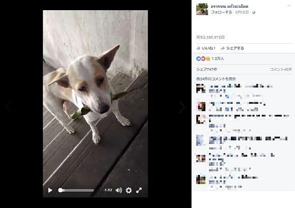 【ワンコの恩返し】エサをくれる女性にプレゼントを運ぶ野良犬が超カワエエ~! SNSで話題となり引き取り手が殺到!!