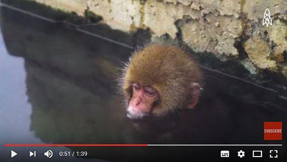 英メディアが『温泉を楽しむニホンザル』を取材して海外ネットユーザー興味津々!「温泉から出た後に凍えないのか心配」など