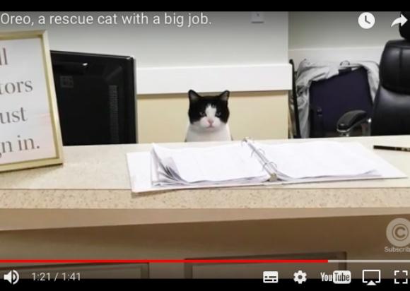 老人ホームで働く元ノラ猫が超カワいいぞ~! 受付デスクを陣取ったり入居者の相手をしたり大忙し!!