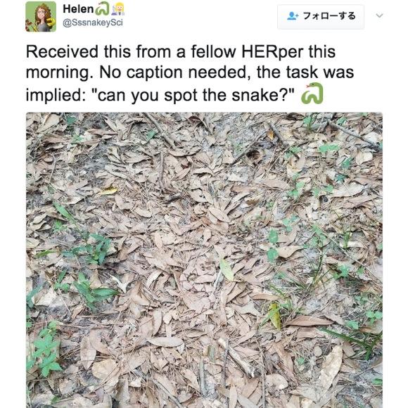 「この中からヘビが見つけられる?」というツイート画像が激ムズだと話題! すぐに発見できたら神レベル