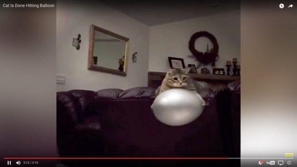 【猫好き必見】「キョトンとした猫の表情」の決定版映像がコレだ!