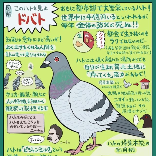【そうだったのか】街で見かける鳩「ドバト」の知られざる生体が話題