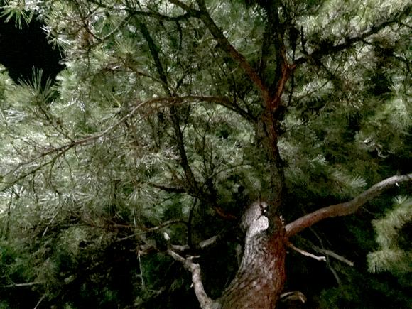 【心霊スポット検証】処刑された罪人の魂が宿るという『祟りの松』で謎の殺気を感じた件 / 千葉・西千葉駅前