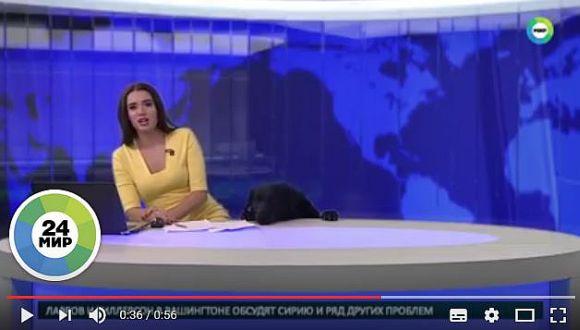 """【放送事故?】ロシアの美人アナに """"ハアハア"""" と荒い息づかいで迫ったのは…… ワンコだった / 女子アナが叫んだ「まさかの言葉」!!"""