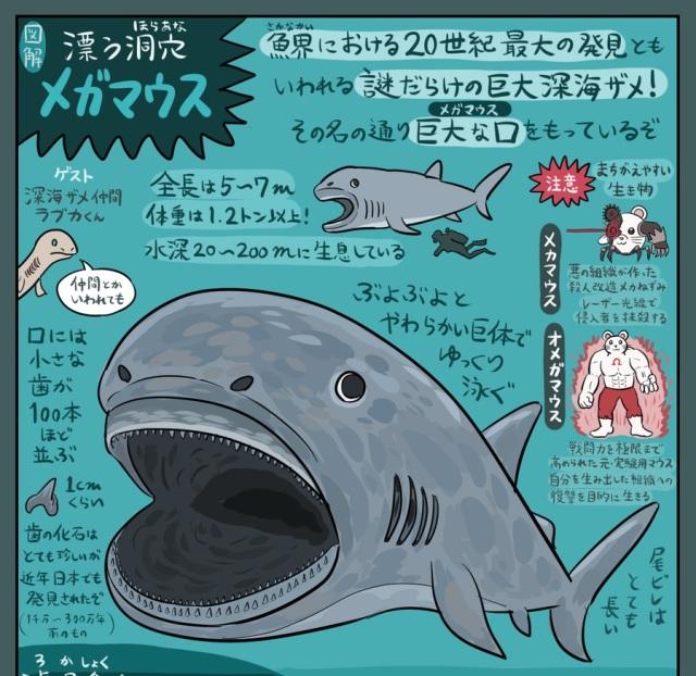 【謎すぎ】幻の巨大ザメ「メガマウス」の知られざる生態が話題