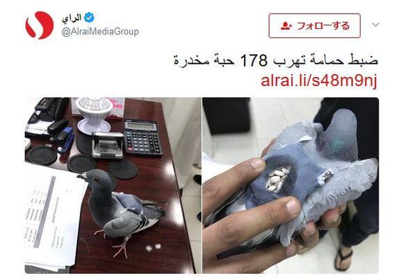 【マジか】背中に約200粒の「違法ドラッグ」を積んだ鳩が保護される / 国境を越えた密輸に使われた模様