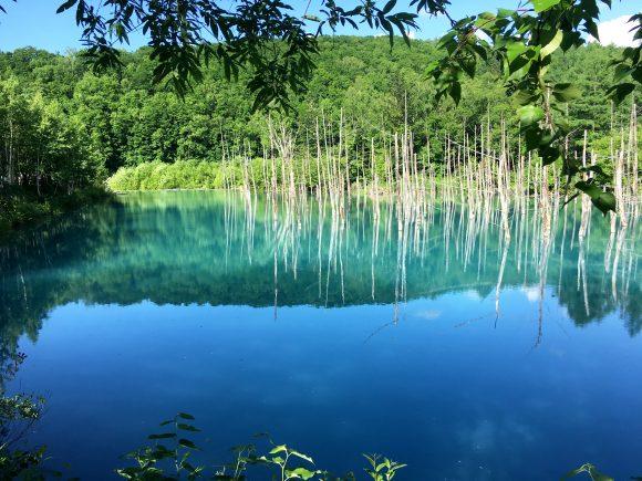 【絶景】サファイアのような水面に映る神秘の世界! 北海道美瑛の「青い池」が異世界への入り口すぎた