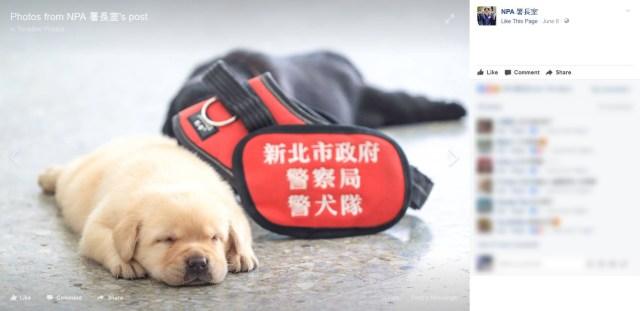 【キュン死注意】台湾警察の新米メンバーが可愛いすぎると話題に