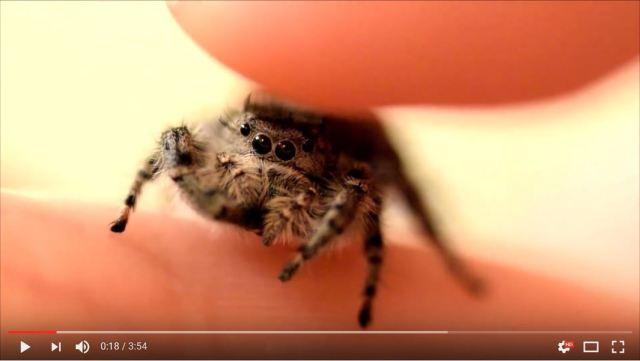 クモの可愛さに気づかせてくれる動画が人気! ネットの声「すべてのクモがこれほど可愛ければ」
