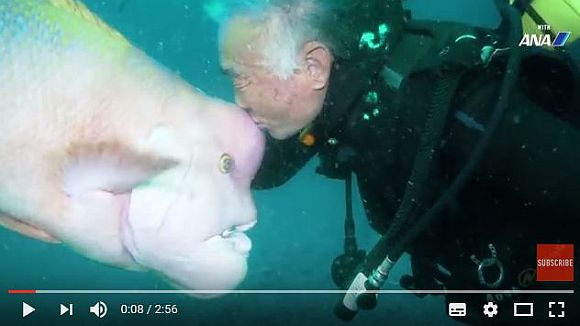 魚と心を通わせる日本人ダイバーが海外で話題に! 海中でキスする絆がまるで『まんが日本昔ばなし』みたい!!